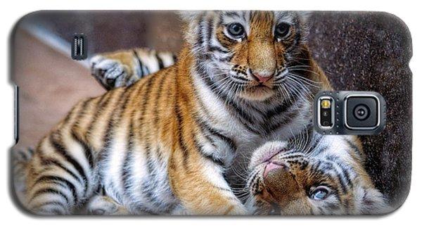 Amur Tiger Cubs Galaxy S5 Case