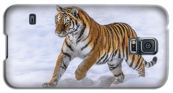 Galaxy S5 Case featuring the photograph Amur Tiger Running In Snow by Rikk Flohr