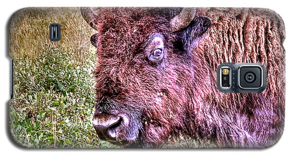 An Astonished Bison Galaxy S5 Case