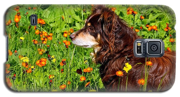 Galaxy S5 Case featuring the photograph An Aussie's Thoughtful Moment by Debbie Oppermann