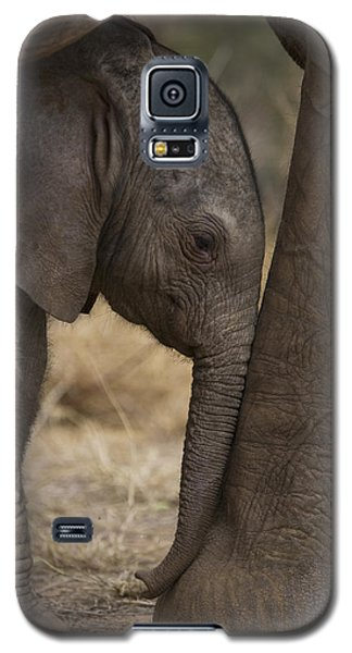Elephant Galaxy S5 Case - An Elephant Calf Finds Shelter Amid by Michael Nichols