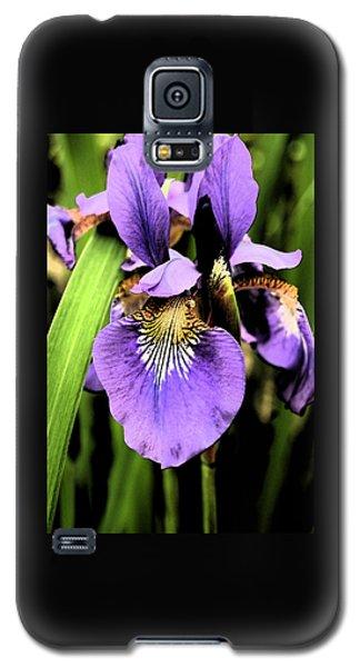 An Iris Portrait - Botanical Galaxy S5 Case by Margie Avellino