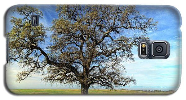 Galaxy S5 Case featuring the photograph An Oak In Spring by James Eddy