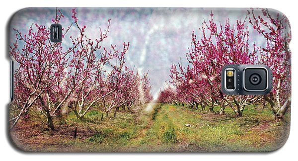 An Orchard In Blossom In The Golan Heights Galaxy S5 Case