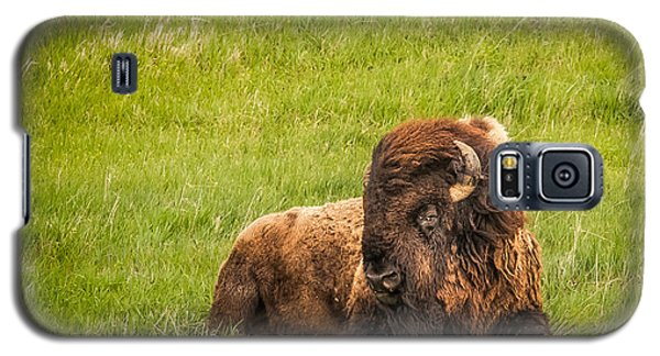 Galaxy S5 Case featuring the photograph Ancient Bison by Rikk Flohr