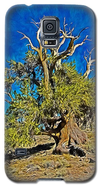 Ancient Bristlecone Pine Galaxy S5 Case