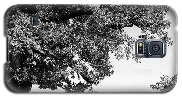 Galaxy S5 Case - Ancient Oak, Bradgate Park by John Edwards