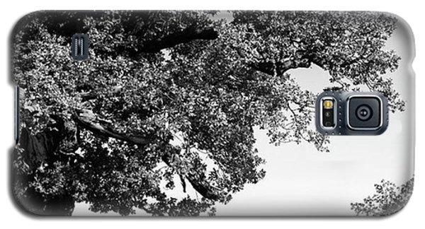 Amazing Galaxy S5 Case - Ancient Oak, Bradgate Park by John Edwards