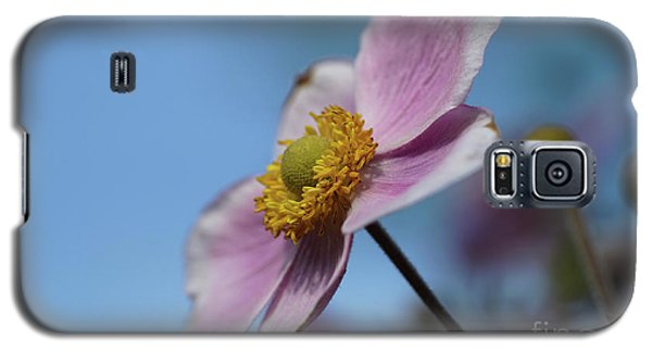 Anemone Tomentosa Flower Galaxy S5 Case