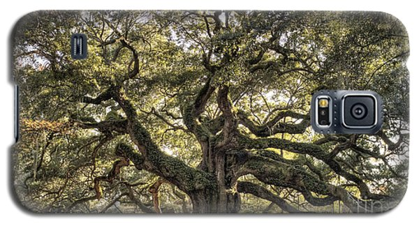 Angel Oak Tree Live Oak  Galaxy S5 Case