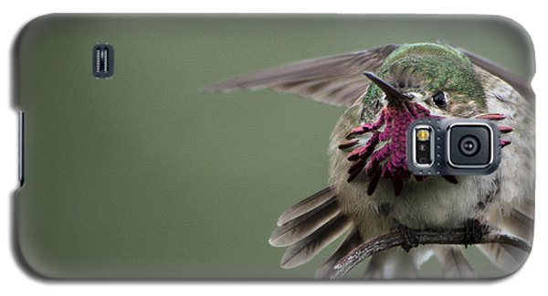 Angry Bird Galaxy S5 Case