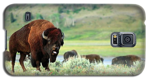 Angry Buffalo Galaxy S5 Case by Todd Klassy