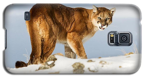 Angry Mountain Lion Galaxy S5 Case