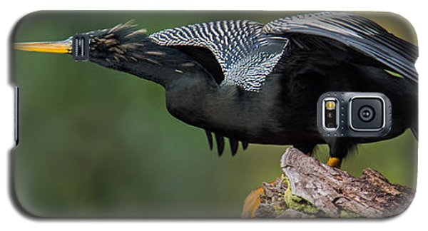 Anhinga Anhinga Anhinga, Costa Rica Galaxy S5 Case by Panoramic Images