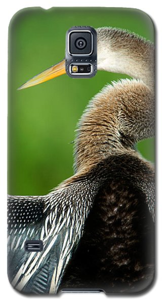 Anhinga Anhinga Anhinga, Pantanal Galaxy S5 Case by Panoramic Images