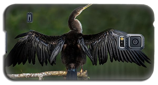 Anhinga Anhinga Anhinga Perching Galaxy S5 Case by Panoramic Images