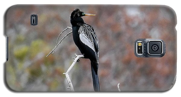 Galaxy S5 Case featuring the photograph Anhinga by Gary Wightman