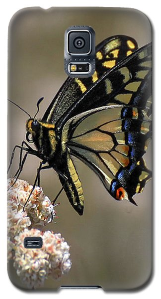 Anise Swallowtail Galaxy S5 Case