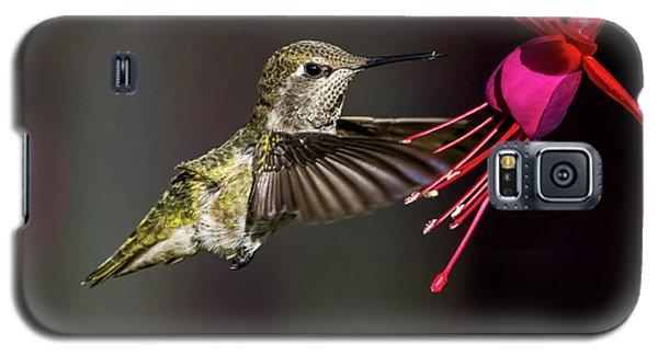Anna Juvenile Hummingbird Galaxy S5 Case