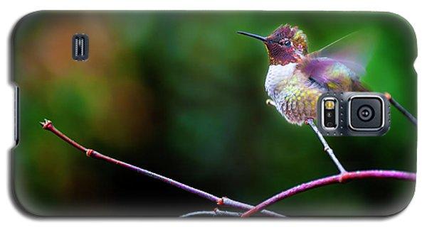 Anna's Hummingbird IIi Galaxy S5 Case