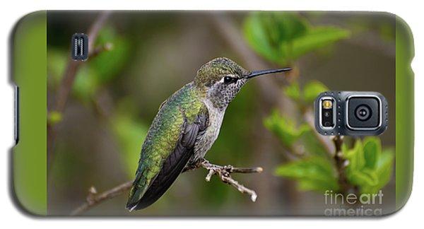 Anna's Hummingbird On Lime Tree Galaxy S5 Case