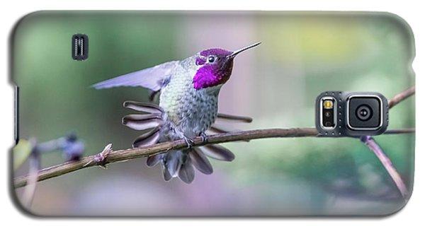 Anna's Hummingbird Stretching Galaxy S5 Case