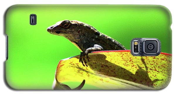 Anole In Green Galaxy S5 Case