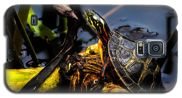 Ant Meets Turtle Galaxy S5 Case by Bob Orsillo