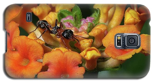 Galaxy S5 Case featuring the photograph Ant On Plant  by Richard Rizzo
