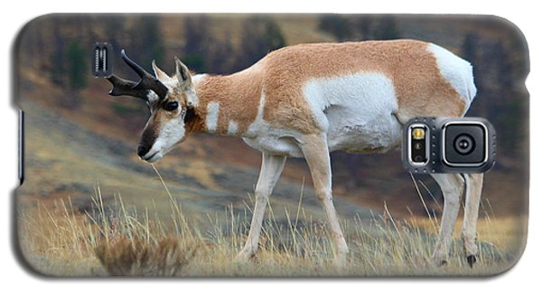 Galaxy S5 Case featuring the photograph Antelope by Irina Hays