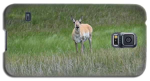 Prong Horned Antelope Lake John Swa Co Galaxy S5 Case