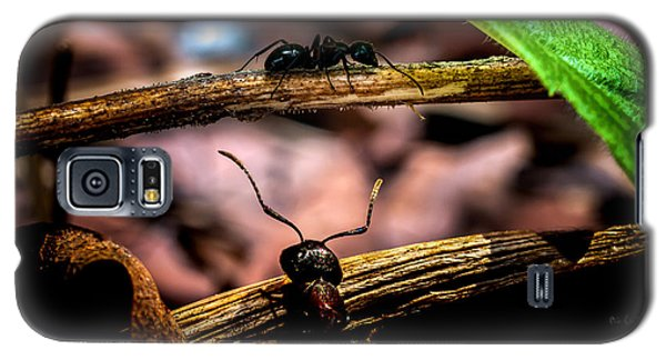 Ants Adventure Galaxy S5 Case by Bob Orsillo