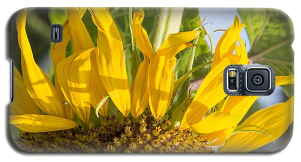 Ants On A Sunflower Galaxy S5 Case