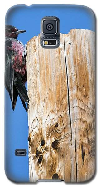 Any Tree Will Do Galaxy S5 Case by Mike Dawson