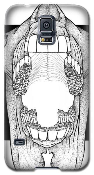 Ap View Dental Skull Galaxy S5 Case