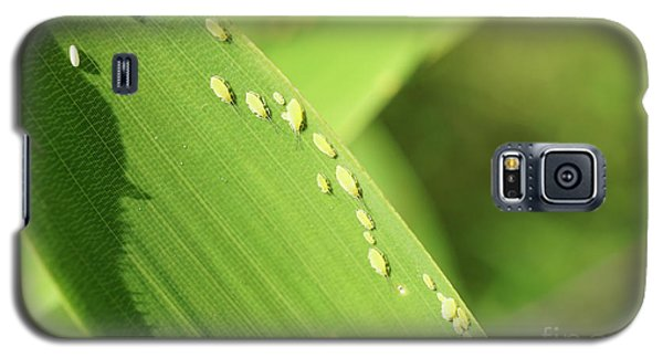 Aphid Family Galaxy S5 Case