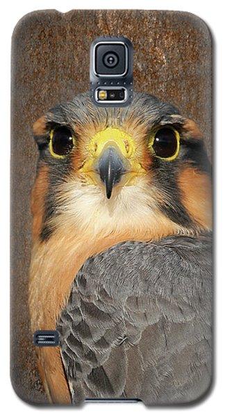 Aplomado Falcon Portrait Galaxy S5 Case