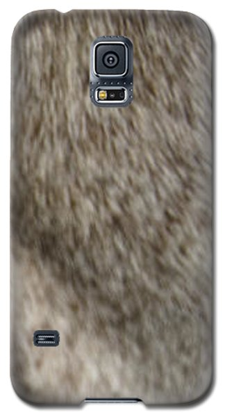 Appaloosa 2 Galaxy S5 Case