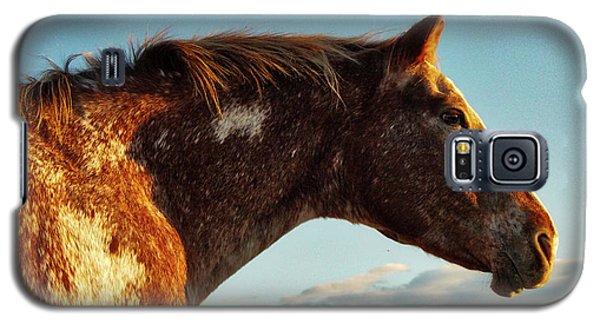 Appaloosa Mare Galaxy S5 Case