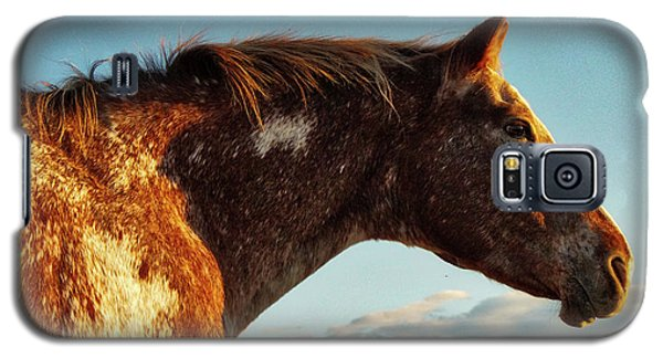 Appaloosa Mare Galaxy S5 Case