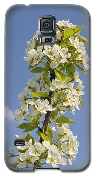 Apple Blossom In Spring Galaxy S5 Case