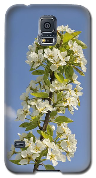 Apple Blossom In Spring Galaxy S5 Case by Matthias Hauser