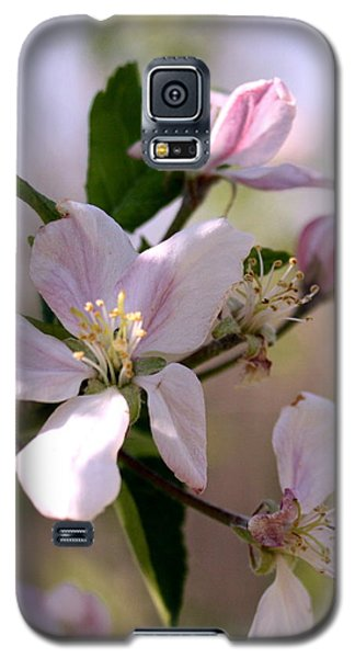 Galaxy S5 Case featuring the photograph Apple Blossom Time by Diane Merkle
