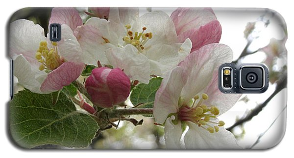 Galaxy S5 Case featuring the photograph Apple Blossoms - Wild Apple by Angie Rea
