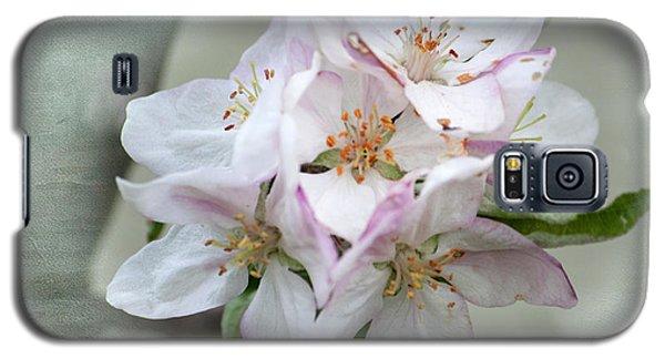 Apple Blossoms From My Hepburn Garden Galaxy S5 Case
