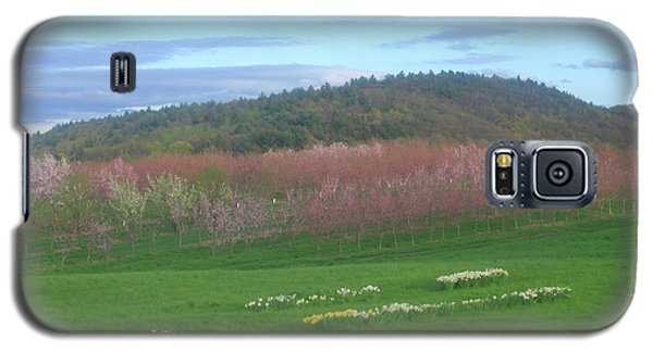 Apple Blossoms In Spring Galaxy S5 Case by John Burk