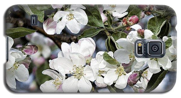 Apple Blossoms Galaxy S5 Case
