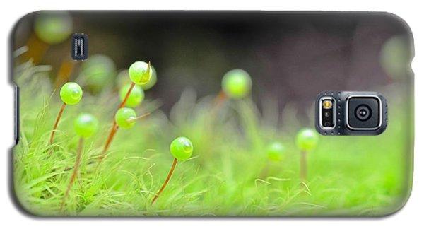 Apple Moss Galaxy S5 Case