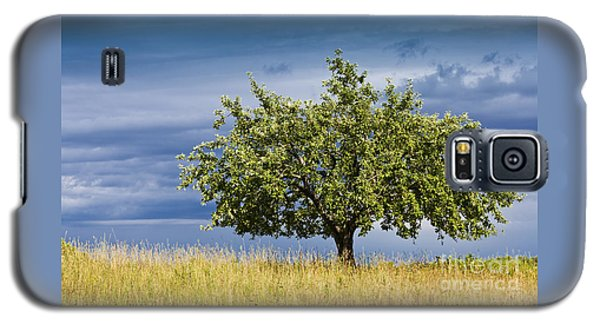 Apple Tree Summer Landscape Galaxy S5 Case