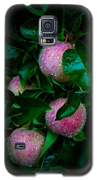 Apples After The Rain Galaxy S5 Case